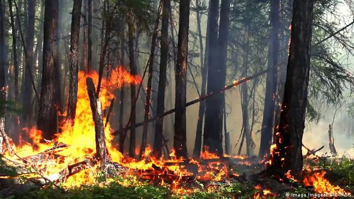 Wood burns on the forest floor in Russia (Imago Images/ITAR-TASS)