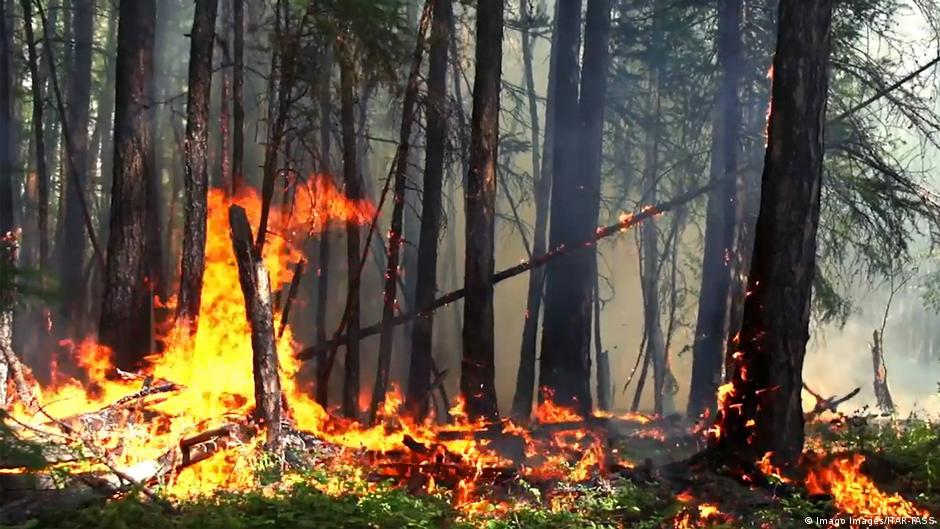 Image result for forestry waste collection model wildfires