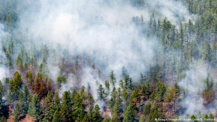 Площа лісових пожеж в Сибіру не зменшується