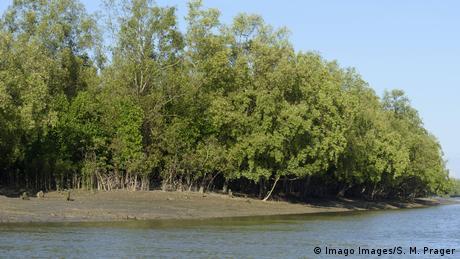 Mangrovenwald in Myanmar (Imago Images/S. M. Prager)