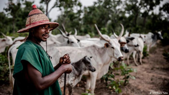 Nigreria Fulani-Nomaden