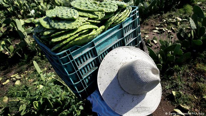 Global Ideas Mexiko Bioplastik aus Nopal