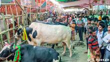 07.08.19***Gabtoli Cattel Market in Bangladesh Capital Dhaka.