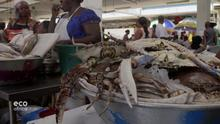 DW Eco Africa Sendung | Protecting marine life while supporting Gabon's fisheries