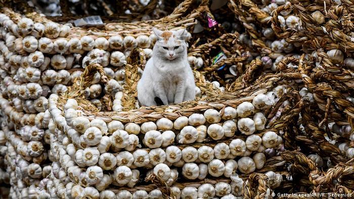 BdTD Argentinien Inflation | Markt in Tapiales, Buenos Aires | Katze auf Knoblauch (Getty Images/AFP/R. Schemidt)