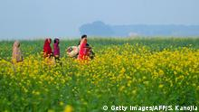 Indian villagers pass through a mustard field in the Jushi area, near Allahabad on January 7, 2015. Mustard is an annual herb, cultivated as an oil seed crop or as vegetable or as fodder. AFP PHOTO / SANJAY KANOJIA (Photo credit should read Sanjay Kanojia/AFP/Getty Images)