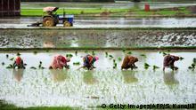 Indien Landwirtschaft