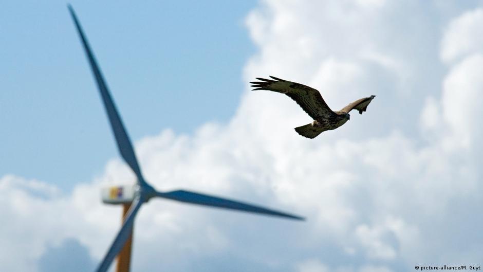 Windkraft und Vögel