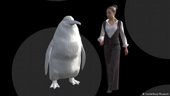 A 3D model of a fossil of the Crossvallia waiparensis penguin (Canterbury Museum)