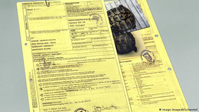 Un certificado CITES para la tortuga mora (Testudo graeca)