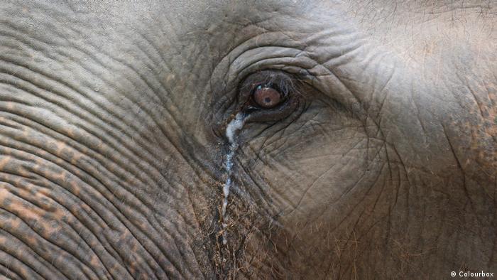 آیا فیلها هم گریه میکنند؟