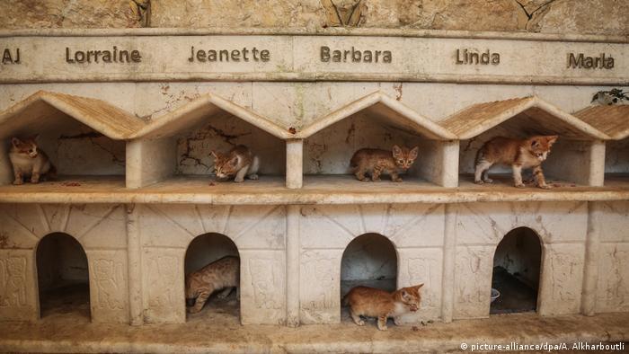 В края на 2016 година приютът за животни е улучен и разрушен от бомбите. Алаа бил принуден да бяга от войските на Башар Асад и се установил в съседен Идлиб - заедно с 22 котки. Там той отново открил приют за животни. Заедно с 200 котки, в него са подслонени кучета, маймуни, зайчета и други безпризорни животни.