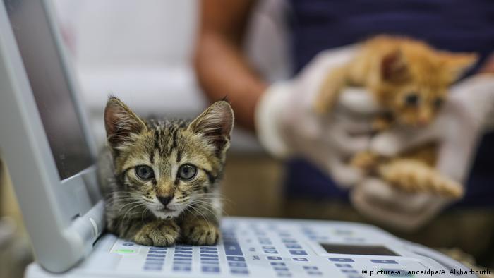 Nielegalny handel zwierzętami