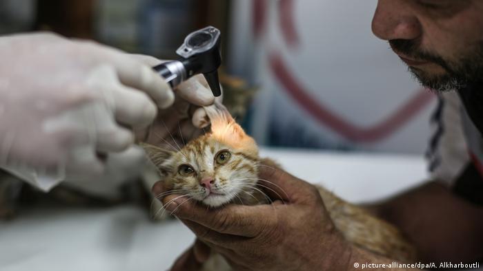 Alaa sostiene a un gato entre sus manos mientras es atendido médicamente