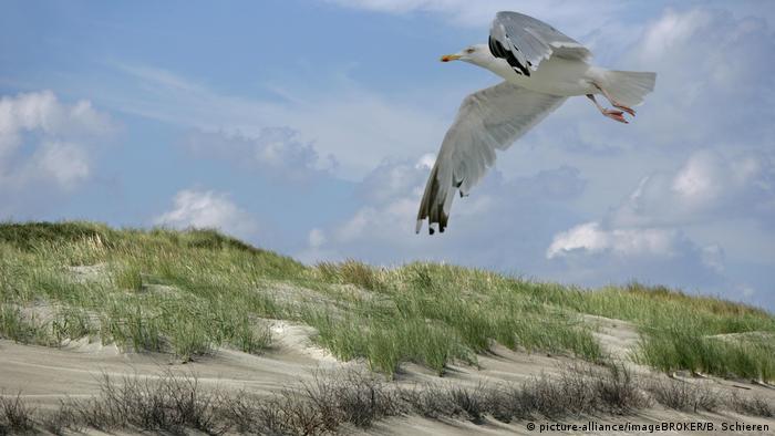 Песчаные дюны на острове Йюст