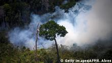 View of a forest fire in the Amazon forest during an overflight by Greenpeace activists over areas of illegal exploitation of timber, as part of the second stage of the The Amazon's Silent Crisis report, in the state of Para, Brazil, on October 14, 2014. According to Greenpeace's report, timber trucks carry at night illegally felled trees to sawmills, which then process them and export the wood as if it was from a legal origin to France, Belgium, Sweden and the Netherlands. AFP PHOTO / Raphael Alves / AFP PHOTO / RAPHAEL ALVES (Photo credit should read RAPHAEL ALVES/AFP/Getty Images)
