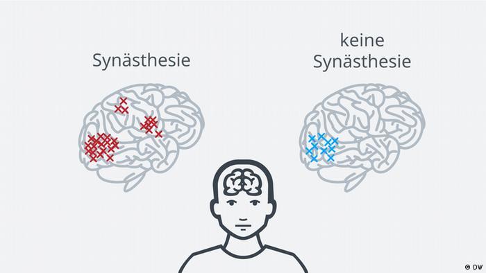 DW-Grafik zu Menschen mit Synästhesie (DW)