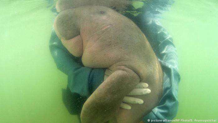 A Thai marine official hugs Marium, a baby dugong separated from her mother, near Libong island, Trang province