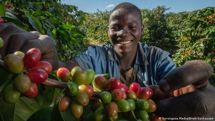 Can coffee growing in Mozambique save a rainforest and keep the peace?
