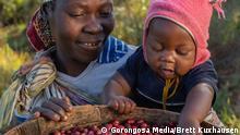 """ACHTUNG: Nur im Zusammenhang mit dem Global Ideas Bericht zu verwenden! **** Juli 2019 **** Urheber: Brett Kuxhausen Gorongosa Media Ort: Mount Gorongosa, Mozambik Bildbeschreibung: Rund 1000 Bauern arbeiten in dem Projekt """"Gorongosa Coffee"""" mit. Durch den Kaffee-Anbau im Schatten von Hartholzbäumen soll nicht nur das Ökosystem, sondern auch der Lebensunterhalt der Menschen gesichert werden."""