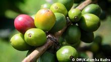 Uganda Bwindi Kaffeebauern Kooperative