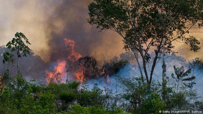 Chamas e fumaça entre árvores e arbustos de floresta