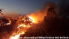 Brasilien Brände im Amazonasgebiet