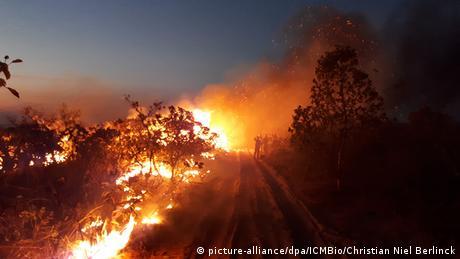 Президент Бразилії закидає підпали лісів екологічним активістам