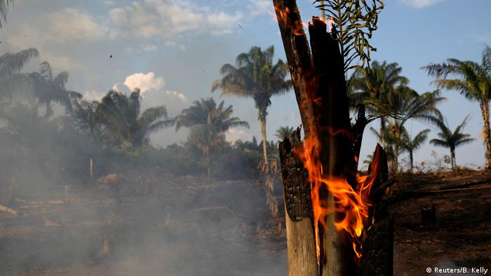 Wildfire in Brazil's Amazon rainforest (Reuters/B. Kelly)