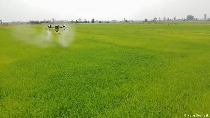 Agricultural drone flying over a field in Cambodia (Heng Sopheak)