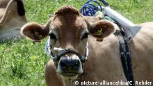 BdT Deutschland Forscher untersuchen den Methanausstoß von Kühen