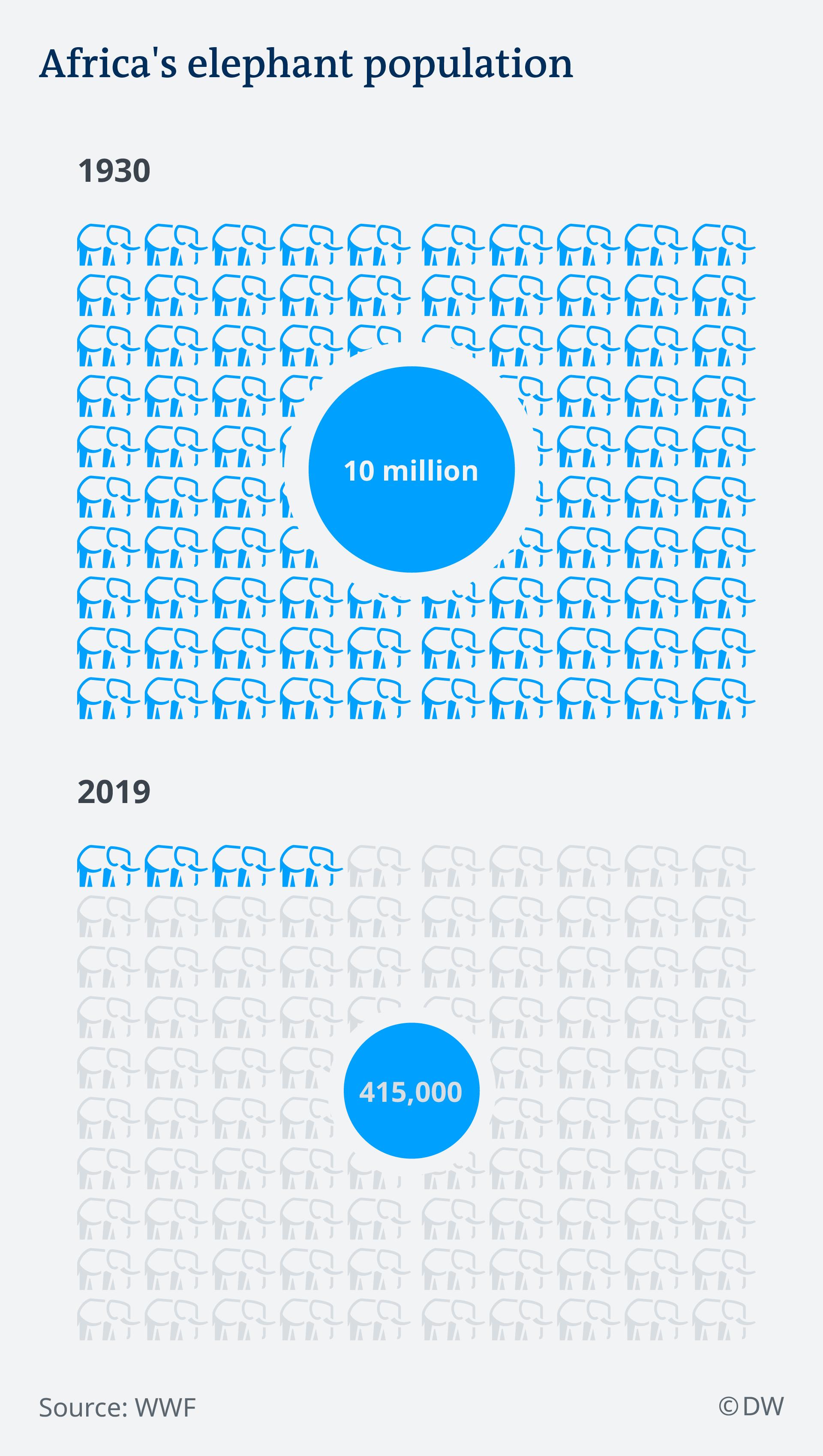 Infografik Population afrikanischer Elefanten