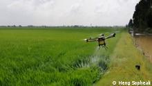 Landwirtschaftliche Drohne im Flug Eine landwirtschaftliche Drohne, entwickelt und gebaut von dem Erfinder Heng Sopheak sprüht ein Pestizid über einem Feld aus. (Foto: Heng Sopheak)
