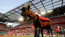 23.08.2019+++Köln, Deutschland+++ Soccer Football - Bundesliga - FC Cologne v Borussia Dortmund - RheinEnergieStadion, Cologne, Germany - August 23, 2019 FC Cologne mascot Hennes inside the stadium before the match REUTERS/Wolfgang Rattay DFL regulations prohibit any use of photographs as image sequences and/or quasi-video