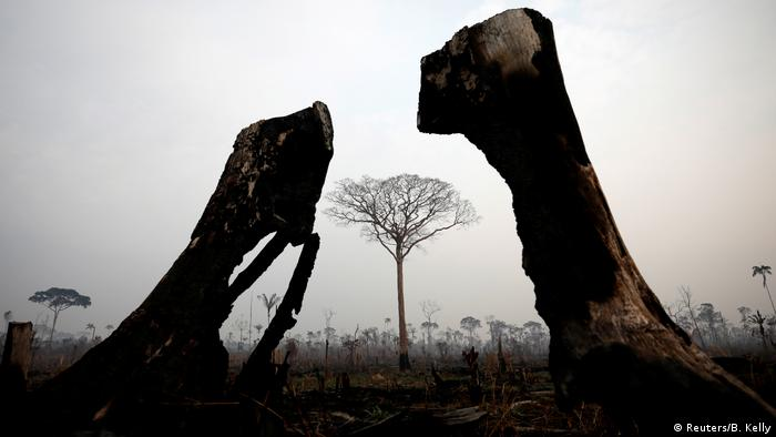 Durch Brände zerstörter Amazonas-Regenwald in Brasilien