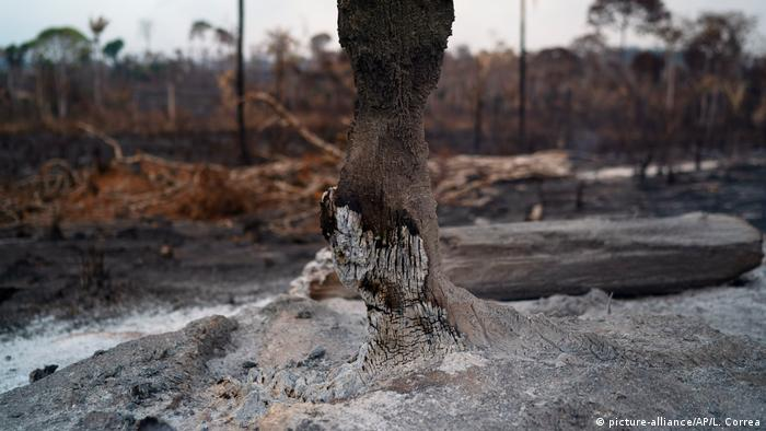 Trees destroyed after fires last year in Brazilian Amazon