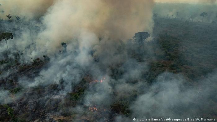 горящие леса в Бразилии