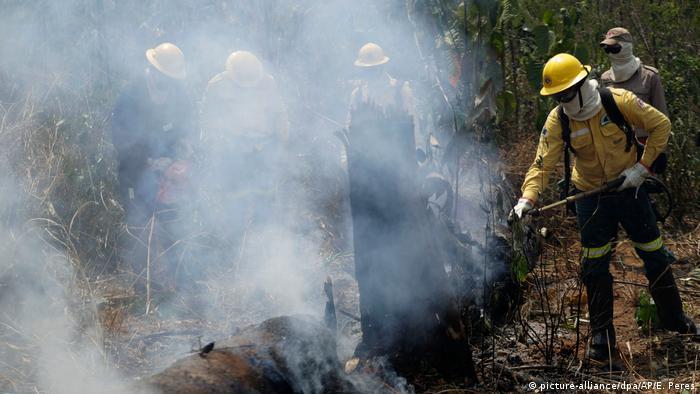 Brasilien Waldbrände (picture-alliance/dpa/AP/E. Peres)