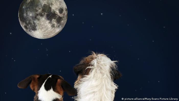 Zwei Hunde blicken auf Mond