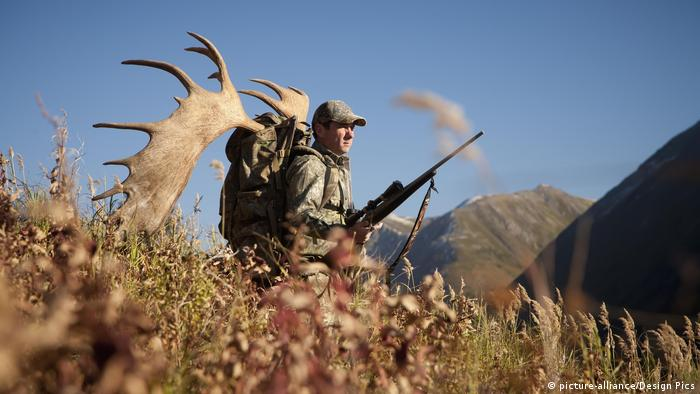 Hunter with trophy moose antler on his pack in Alaska, Chugach Mountains