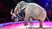 Artenschutzabkommen Elefanten im Zirkus