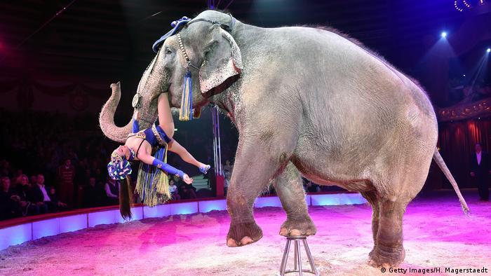 Выступление слона в цирке