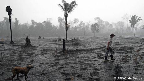 A Brazilian farmer and a dog walk through a burnt area of the Amazon rainforest