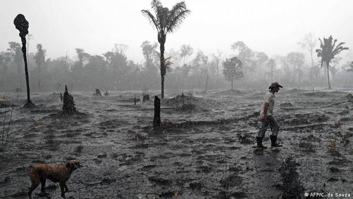 A Brazilian farmer and a dog walk through a burning area in the Amazon rainforest