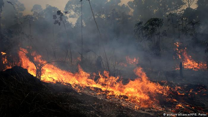 A forest fire burns trees and brush in Brazil's Amazon