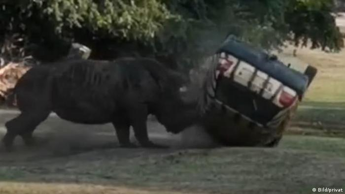 Kusini the rhinoceros overturns a small vehicle carrying a parkkeeper.