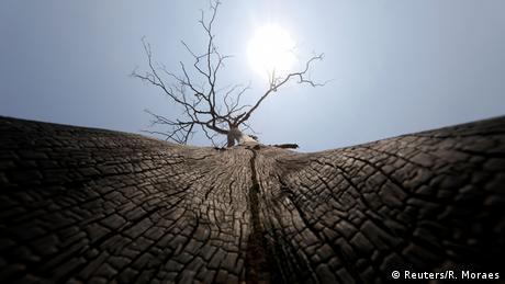 Požari u Amazoniji bjesne već nedjeljama. Prema mišljenju stručnjaka, postoji jasna veza između ilegalne sječe prašume i požara. Ovo spaljeno drvo nijemi je svjedok vatrene stihije.