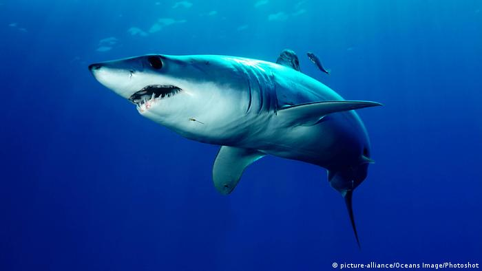 Mako Shark (picture-alliance/Oceans Image/Photoshot)