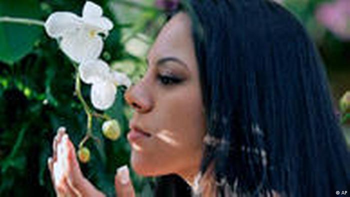 Orchideenfächer in Deutschland Nase riecht an Orchidee