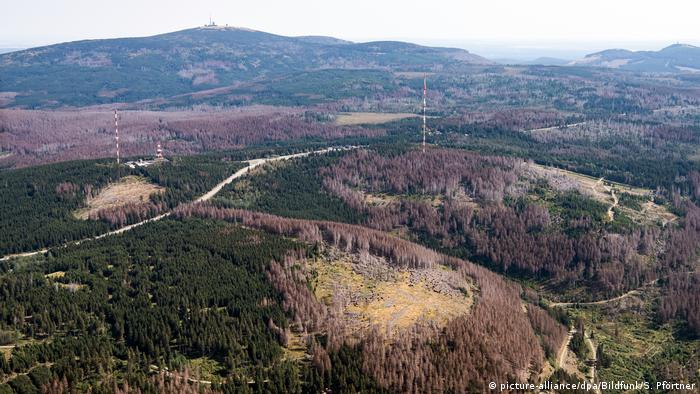 Deutschland | Waldsterben (picture-alliance/dpa/Bildfunk/S. Pförtner)